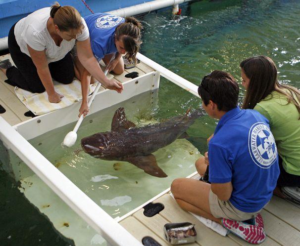 Aquarium zookeeping 101 target feeding publicscrutiny Image collections